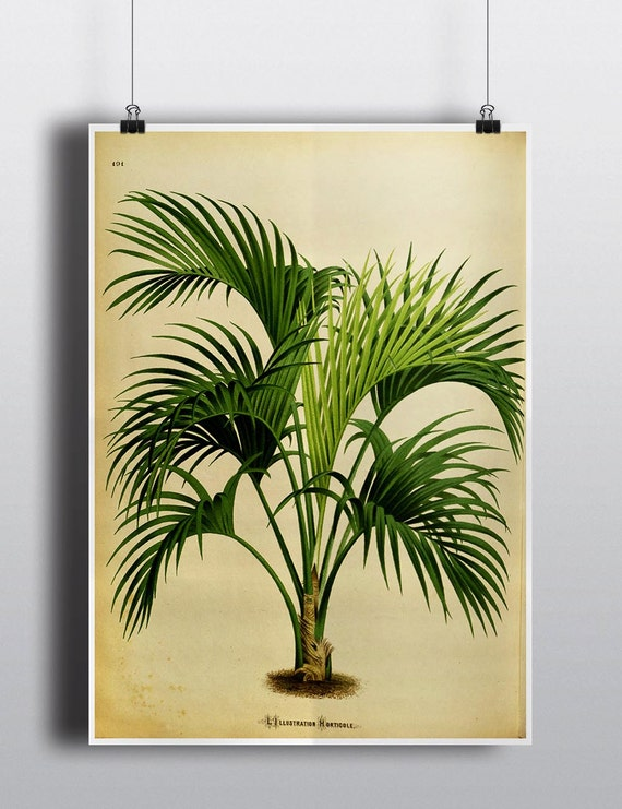 Antique 1800s Palm Tree Print Botanical Print Art Print Wall