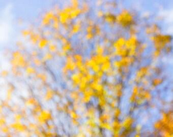 Soft Focus Nature Photography, Abstract Art, Tree Fine Art Print, Gold, Blue, Yellow Decor, Modern Wall Art