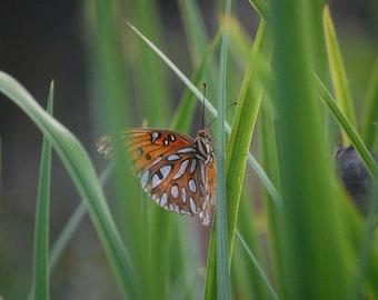 Sneaky Butterfly