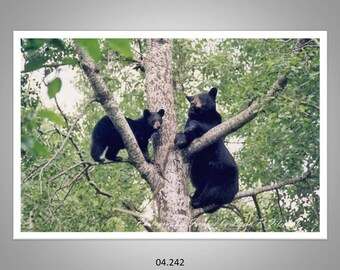 04.242 Black Bear Mom and Cub Limited Edition, Signed and Numbered, 11x14 Matted Images (white mat)