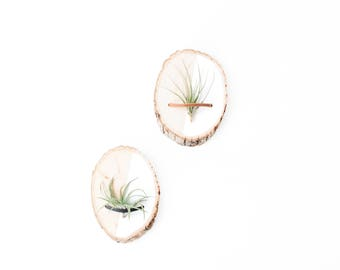 Wood Air Plant Holder