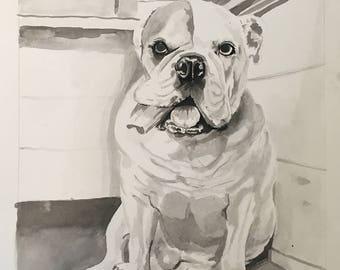 Pet Portraits, Pen and Ink Pet Portraits, Dog Portraits, Cat Portraits, Multiple Animal Portraits