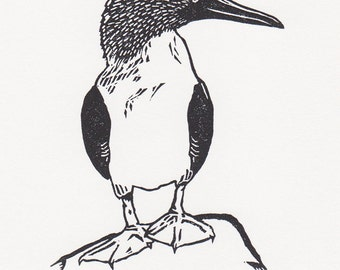 "Blue-footed booby - limited edition, original fine art block print (4 x 5.5"")"