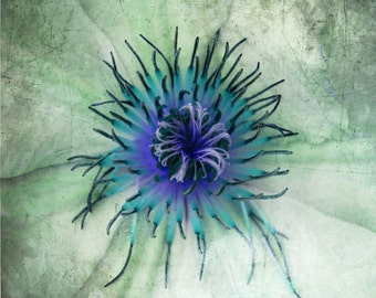 Abstract Flower Clematis Art Print - Aqua Blue Green Floral Modern Wall Art Home Decor Photography