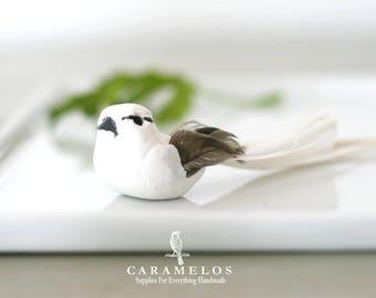 White Long Tail Feather Bird