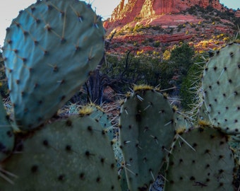 Red Rocks and Prickly Pear Fine Art Photo Print,  in Sedona, AZ. Inspiring Nature Photography