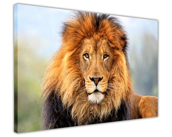 African Lion in the Wild Framed Pictures Canvas Wall Art Animal Prints Home Decoration Photos Nature Images Posters Ready To Hang