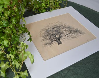 Ophelia Oak Tree Art Print on Wood Veneer - Pen and Ink Drawing - 11x14 - Hofwyl Plantation Georgia