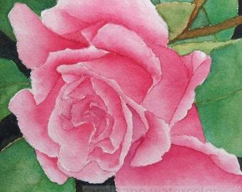 rose watercolor-rose painting-botanical watercolor-botanical painting-flower watercolor-flower art-pink rose painting-pink rose watercolor