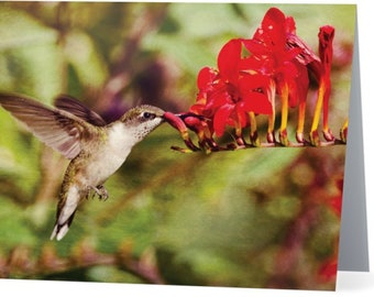 Hummingbird at Crocosmia  - blank note card, Gifts for her, Gifts for mom, Gifts for bird lovers, Gifts for nature lovers