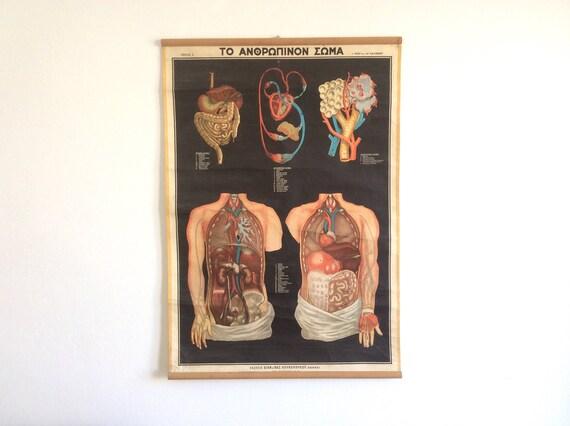 Medizinstudium Diagramm Original Anatomie herunterziehen