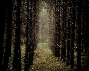 dark art lost doll woods woodland eerie mist fog trees