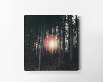 Cowans Gap - Photograph of the Sun Peering Through the Trees on Metal