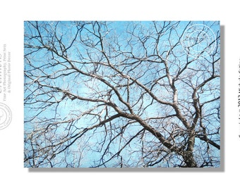 Sky Blue, Pastel Blue Gray Tree Branches, Abstract Photo Large Format Photo Metallic Print 16 x 20