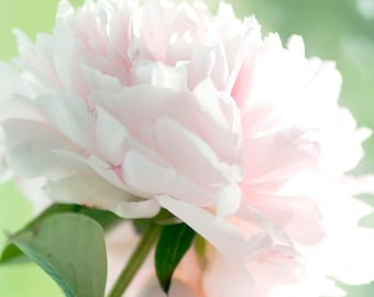 Square Peony Photograph, Pink Floral Wall Decor, Country Chic Decor, Flower Photography, Peony Print, Peony Art