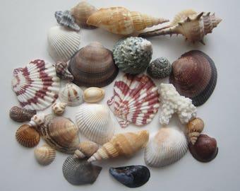 29 pcs Sea shells natural,Bulk assorted sea shells,Mix Beach shells:Fish tank decor
