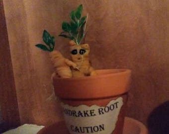 Mandrake root,  magical root