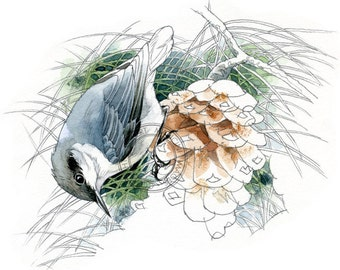 Pygmy Nuthatch - bird art, wildlife art - nature print of original artwork