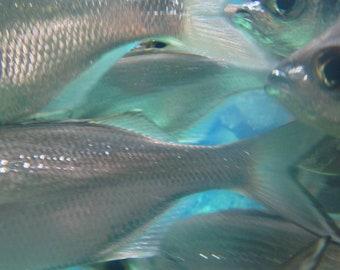 School Of Fish Close-Up Aquatic Photograph Digital Printable Download
