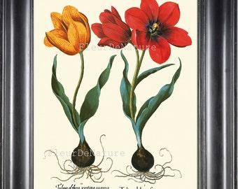 BOTANICAL PRINT Besler 8x10 Botanical Art Print 76 Beautiful Red Yellow Tulip Flower Summer Garden Antique Writing to Frame