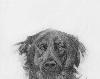 Shelter Dog Series: Jake