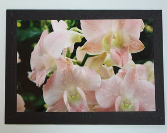 Orchid Photo Mount Blank Greeting Card