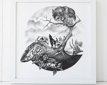 Owl Print 12x12 Fine Art Archival Print
