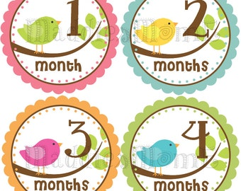 Monthly Baby Girl Stickers Baby Month Stickers, Monthly Bodysuit Sticker, Monthly Stickers Birdies (Avery Birds)