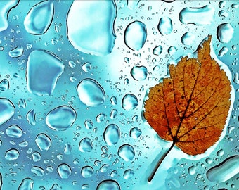 Leaf rain water droplets turquoise window fall Canada