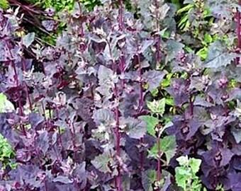 Orach Purple Mountain Spinach Heirloom Garden Seed Non-GMO 100+ Seeds Naturally Grown Open Pollinated Gardening