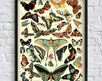 Butterfly wall art print butterfly collection print butterfly gallery wall art decor botanical illustrations vintage art poster Art-142