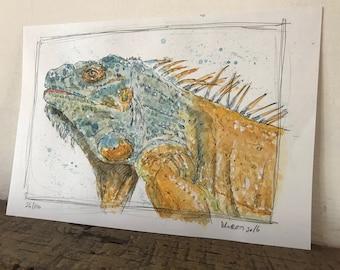 100 Animals, 100 Days: 26/100 The Iguana