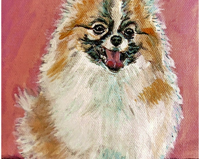 Pomeranian Print Poster