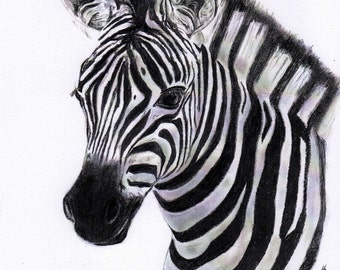Zebra 8x10 charcoal print black and white Zebra wall art Zebra art print Zebra picture Zebra drawing