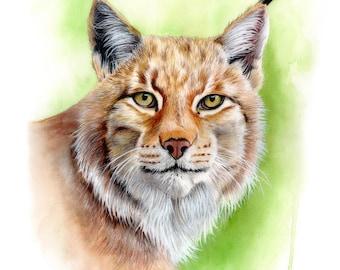 Lynx à l'aquarelle