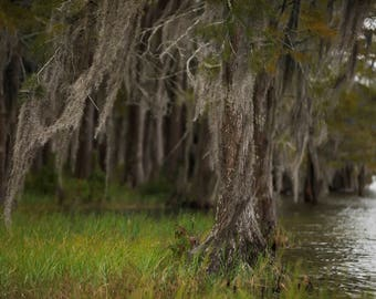 Set of 4 Swamp/Beach Trees with water digital background/digital backdrop/overlay