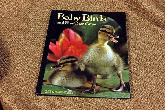 Children's Book, Baby Birds and How They Grow, Jane R. McCauley,National Geographic Society, Hardcover, Non Fiction Book,