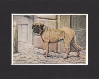 Mastiff 1919  Vintage Dog Print by Louis Agassiz Fuertes Small Painting Print Mounted with Mat - Mastiff Print, Mastiff Dog Print