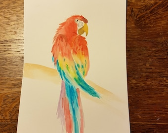 Colourfull Ara