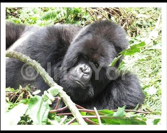Silverback Mountain Gorilla, Rwanda, Volcanoes National Park, Wildlife Photography, Nature, Wall Art, Gift