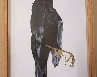 Painting of Black Bird