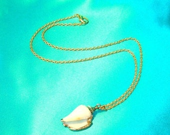 On Sale Gold Trimmed Seashell Necklace