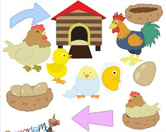 Life Cycle Clip art Chicken