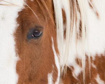 Chief Comes Close - Fine Art Horse Photograph - Paint Horse - Fine Art Print