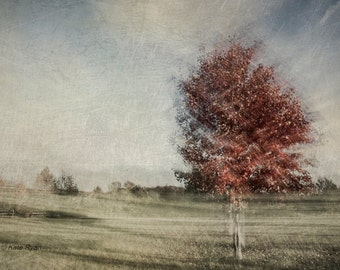 Blue Abstract Art, Nature Print, Autumn Landscape Photo, Fine Art Photograph, Autumn Tree Photo Print, Red Leaves Print, Modern Wall Art