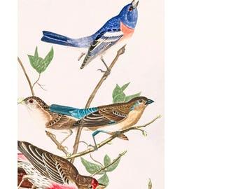 Bird card, 'In the Aviary',  Bird greetings card,  Bird birthday card,  personalized card, blank bird card, wildlife card, nature card,