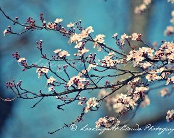plum blossoms against a blue sky, nature photography, flower wall decor, restful zen decor, bedroom, nursery, spa