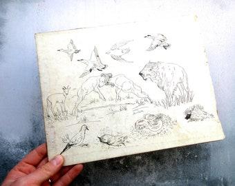 Vintage Hand Drawn Illustration of Animals - Basil Merrett Artist