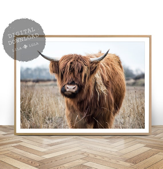 Highland Cow Print, Digital Download, Highland Cow Photography, Printable Wall Art, Bull Photo, Large Modern Poster, Digital Cow Wall Art