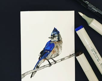 Blue Jay Greeting Card Jay-blank hand sketched original blue jay card